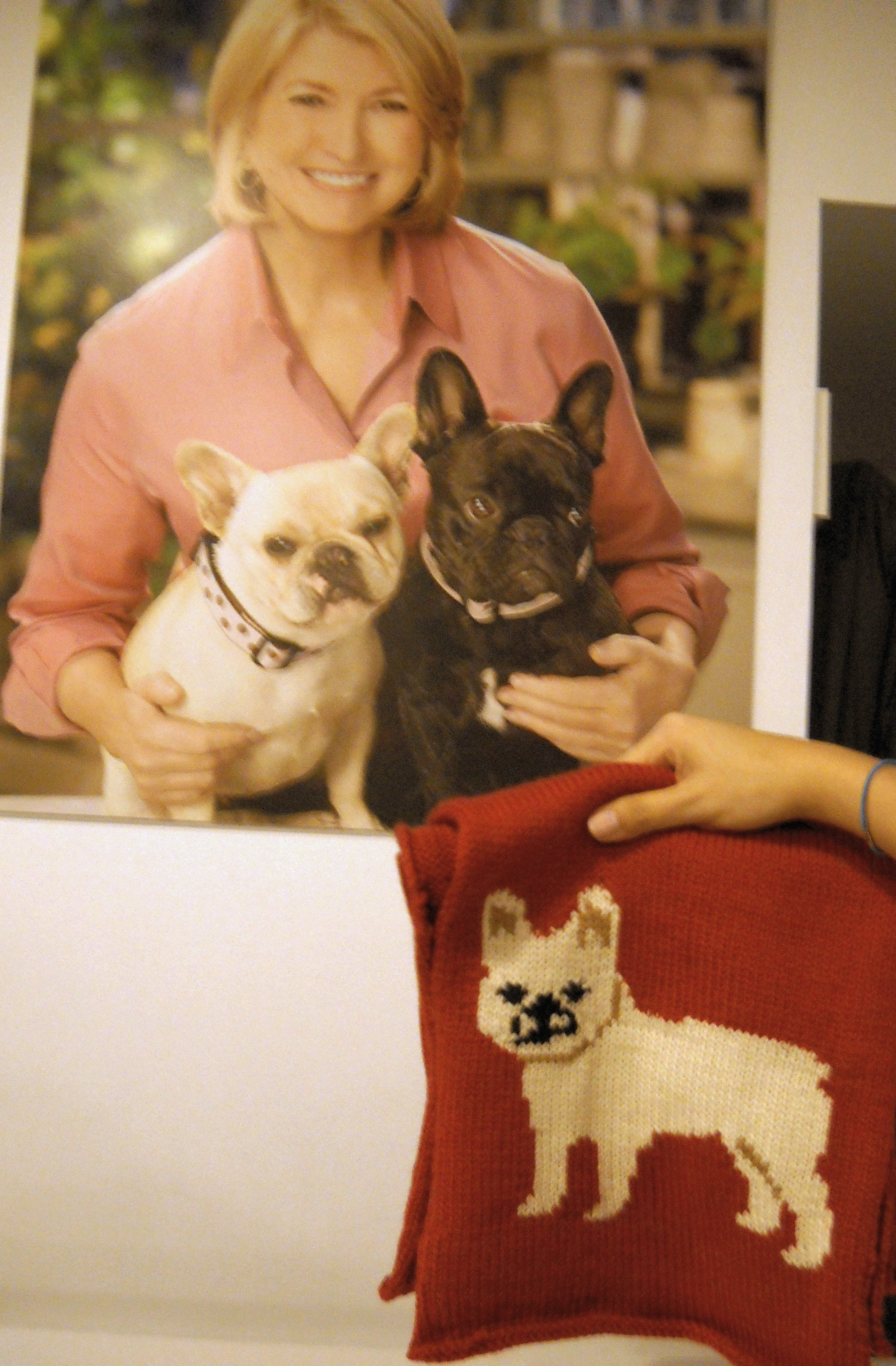 A French Bulldog scarf
